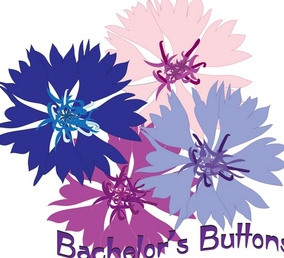 Bachelor buttons photo 5