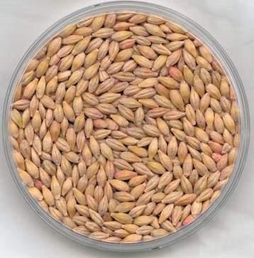 Barley soup photo 2
