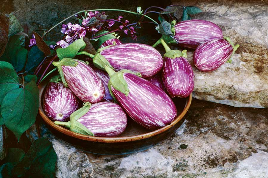Eggplant parmesan photo 1