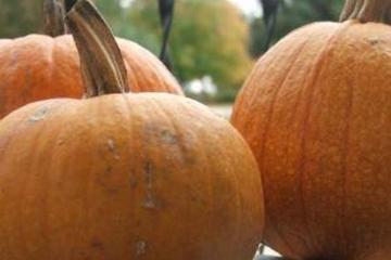 Easy pumpkin cake photo 1