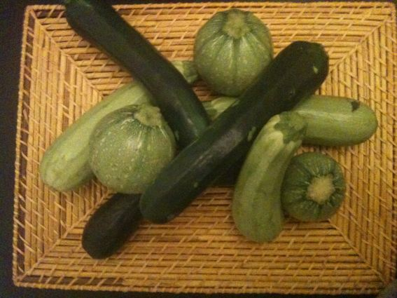 Zucchini appetizer photo 2