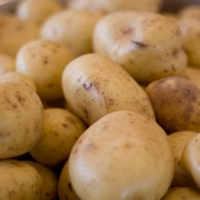 Potatoes Florentine